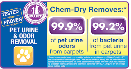 Saratoga Chem-Dry removes 99.9% of pet urine odors from carpets and 99.2% of bacteria from pet urine in carpets in Saratoga Springs NY